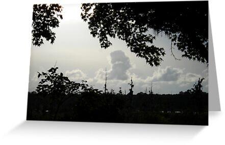 Sunset in Monochrome by May Lattanzio