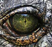 Eye of the Gharial by Dennis Stewart
