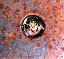 the Peek A Boo Bumble Bee by loralea
