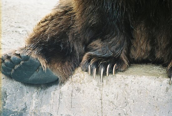 ~Grizzly Bear Claws by NatureGreeting Cards ©ccwri