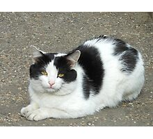 White Cat with Black Patches Photographic Print