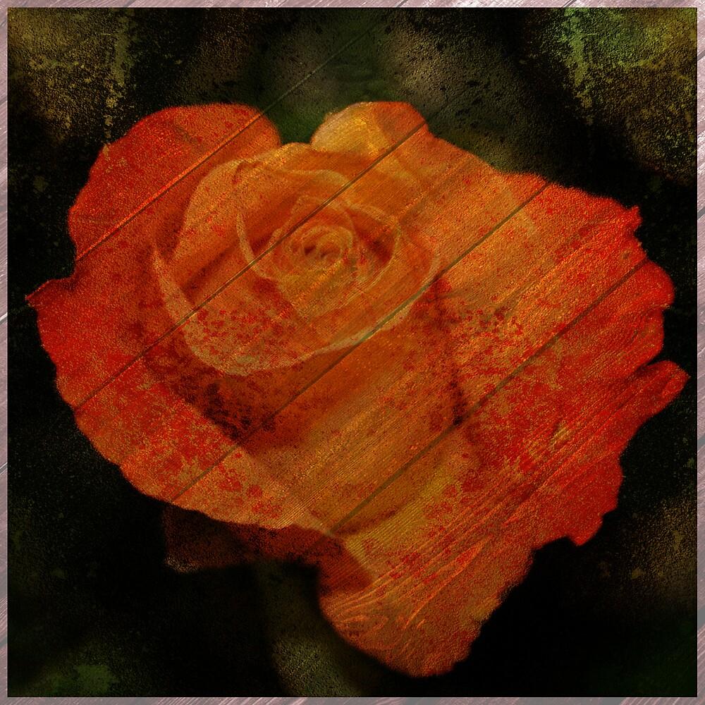 Textured Rose  by Cody  VanDyke