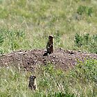 Prairie Dogs by Alyce Taylor