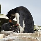Rockhopper Penguins ~ &quot;Love Is&quot; by Robert Elliott