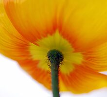 Sunny Side Up by Renee Hubbard Fine Art Photography