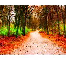 Tiergarten Path Photographic Print