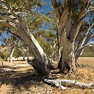 arapiles gums by Andrew Cowell