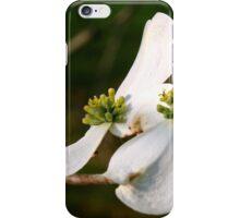 Double Dogwoods iPhone Case/Skin