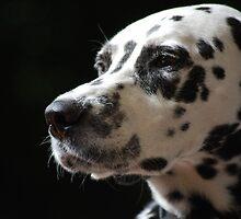 Dalmatian by Rowan  Lewgalon