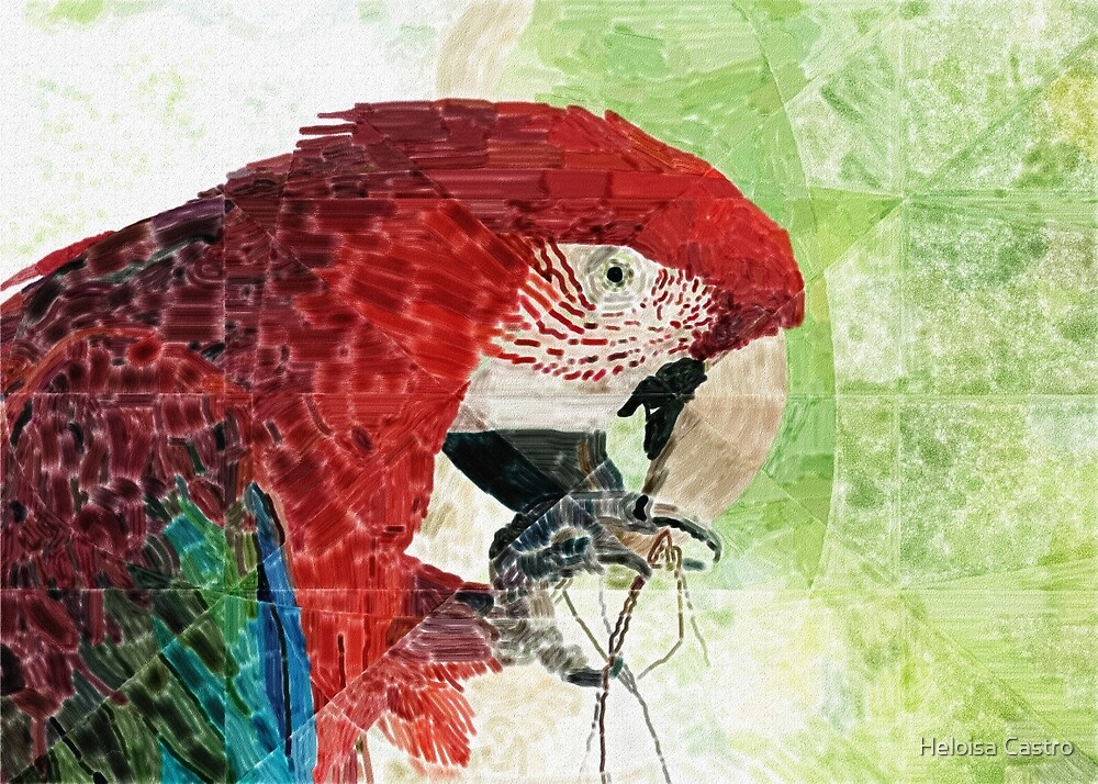 HC 003 Macaw by Heloisa Castro