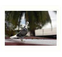 Pigeon Portrait Art Print