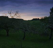 Three Apple -Trees by Antanas