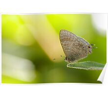 Hairy Lined Blue Poster