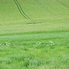 Green land by yvesrossetti