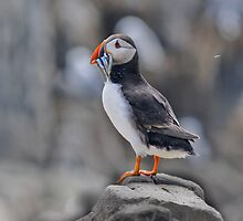 The Puffin by WhartonWizard