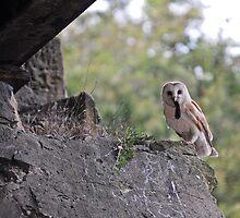 Barn Owl With Kill by WhartonWizard