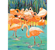 Flamingo's Photographic Print