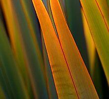 When Green is Golden by Elizabeth Bravo