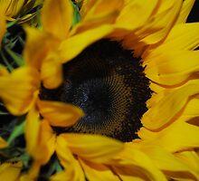 Sunflower Portrait by bloomingvine