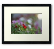 Red and Alone Framed Print