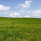Green Grass & Blue Sky by magneta