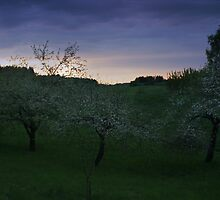 Three Apple-Trees (2) by Antanas