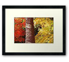 Autumn Colours, Peak District, Derbyshire Framed Print
