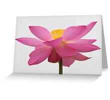An Offering Of Color Greeting Card