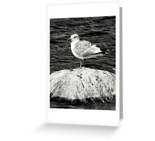 Just Another Gull Greeting Card