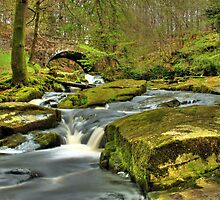 Waterfall Sally Gap by buffalosoldier