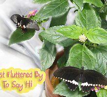 Butterfly Hi! by L J Fraser