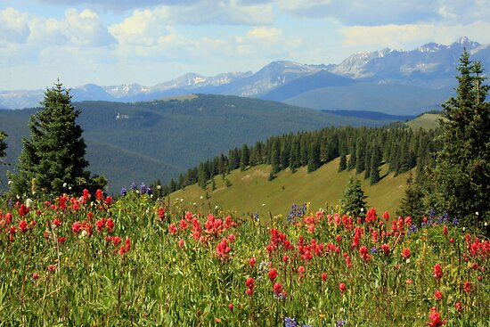 Mountain Flowers by noffi