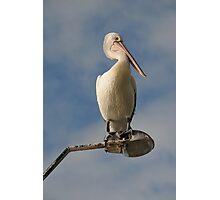 Pelican on Light Pole Photographic Print