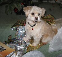 I'm a present =D by Poxx