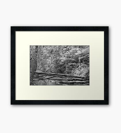 The Trees That Once Stood Framed Print