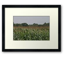 Six Feet And Growing Framed Print