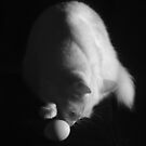 Egg Playing With Cat by jakking