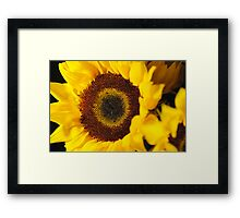 Sunflower Close Up Framed Print