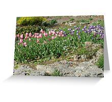 Pink & Purple Tulips III Greeting Card
