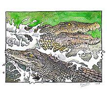 Saltwater crocs Photographic Print
