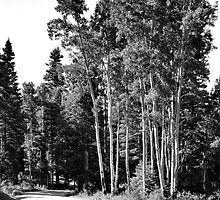 The One Less Traveled By:  New Mexico Back Roads, Part I by Mitchell Tillison