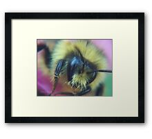 Humble Bumble? Framed Print