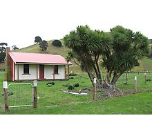 Whakataki Cottage  Photographic Print