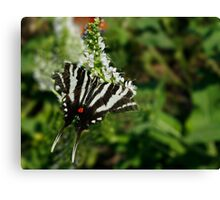 Zebra Swallowtail Canvas Print