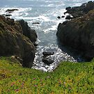 View from Pigeon Point  by Ellen Cotton