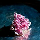 A Dried Rose by Ilva Beretta