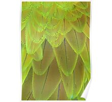 Macaw Feathers Poster