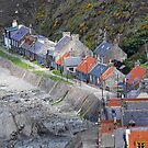 Crovie by Peter Hammer