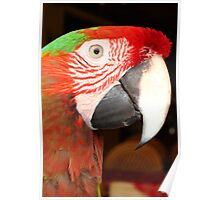 Macaw Portrait Poster