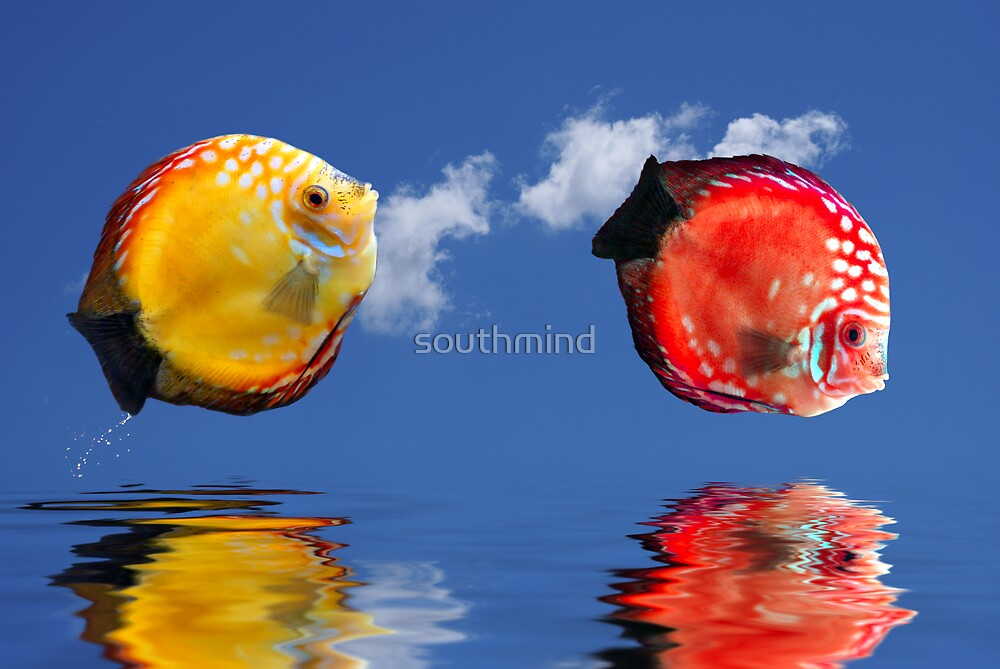 Tropical fishes by southmind